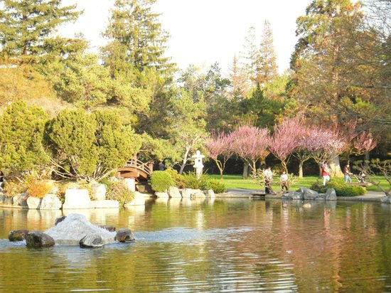 Japanese Friendship Garden:                   Утки