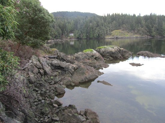 Arbutus Cove Guesthouse:                   View to the left from the deck