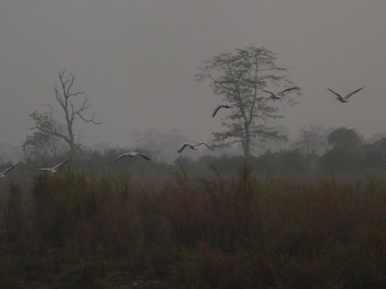 Kaziranga National Park, India:                   Natural Beauty