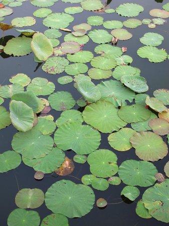 โซฟิเทล อังกอร์ โพคีธรา กอล์ฟ&สปา รีสอร์ท:                   Pond