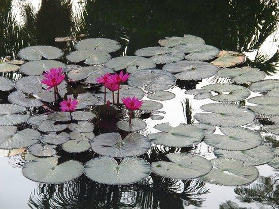 Sofitel Angkor Phokeethra Golf and Spa Resort:                   Blooms in the morning