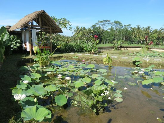 Bidadari Private Villas & Retreat - Ubud:                   庭園にある蓮池