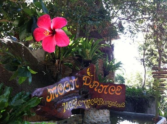 Moon Dance Magic View Bungalow :                   the entrance