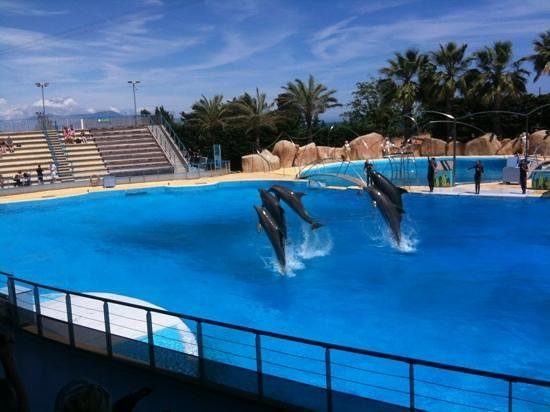 Zoological Gardens:                   les dauphins