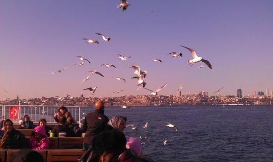 Bosphorus Strait:                   Feeding the seagulls en route