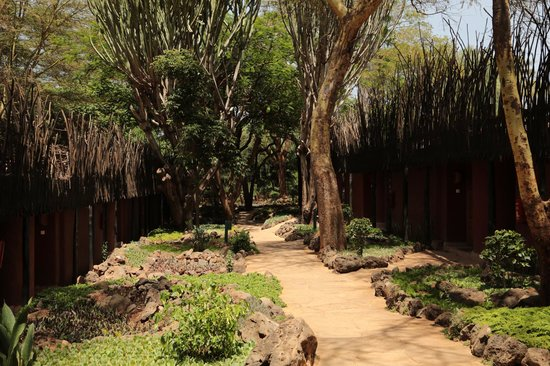 Amboseli Serena Safari Lodge:                   garden between the rooms