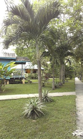 Midas Belize: Resort grounds