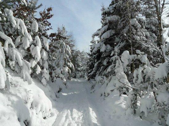 La Petite Source: Hiver et neige au pays de Dabo