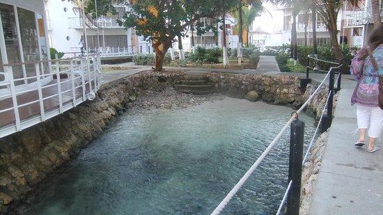 Decameron Aquarium:                                                                         Entre les tours
