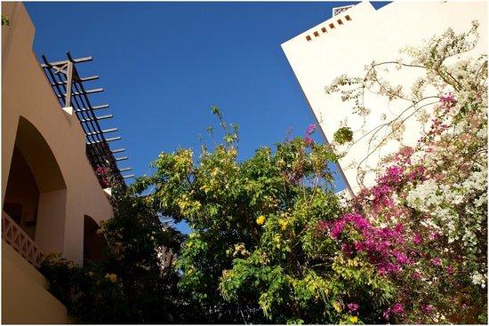 Steigenberger Coraya Beach:                                     Hotel
