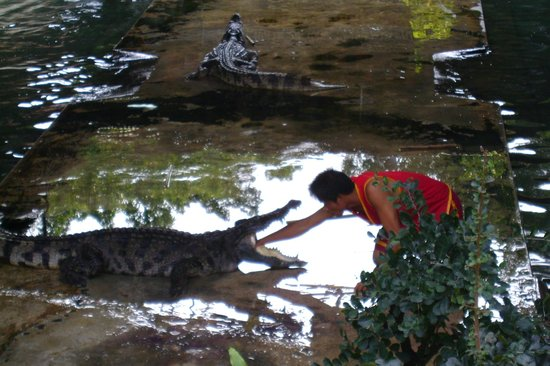 Foto's van Samutprakan Crocodile Farm and Zoo, Bangkok - krokodillen