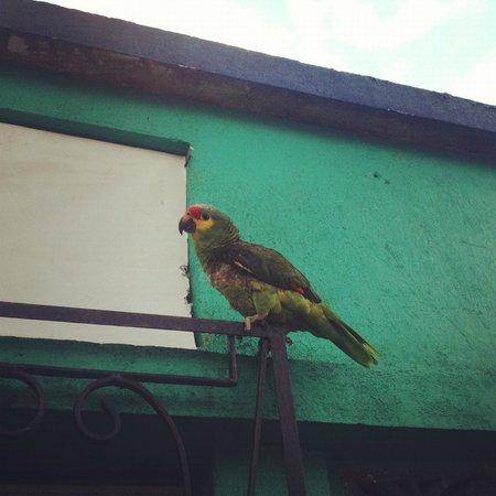 Casa Nostra:                   Erica, the parrot