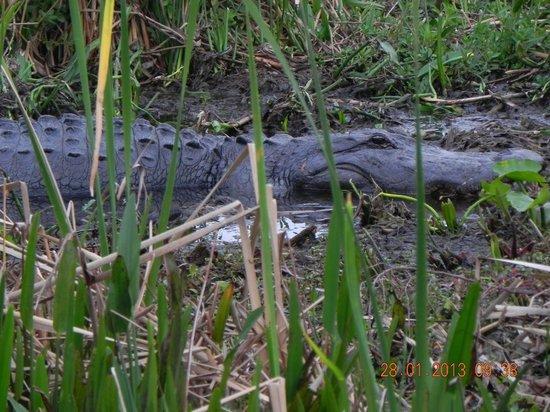 Spirit of the Swamp Airboat Rides: Big John