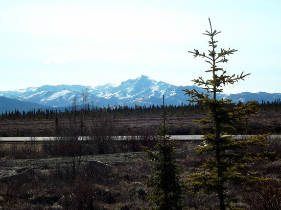 EarthSong Lodge - Denali's Natural Retreat:                   The View