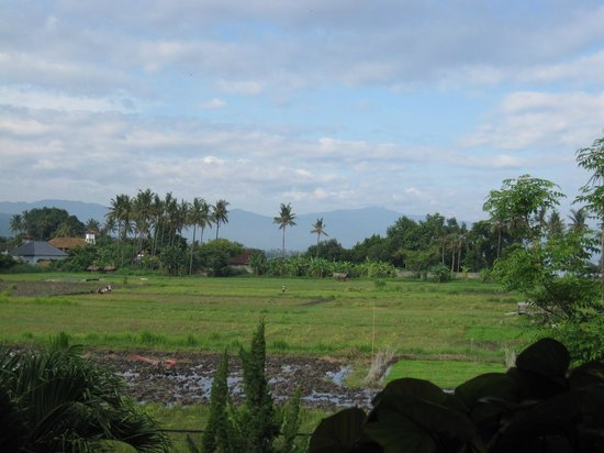 Bali Paradise Hotel Boutique Resort:                   Lovely watching the rice paddies