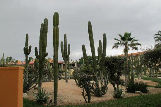 Posada Real Los Cabos: Cactus garden