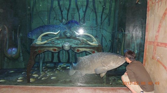 Atlantis, The Palm:                   水族館