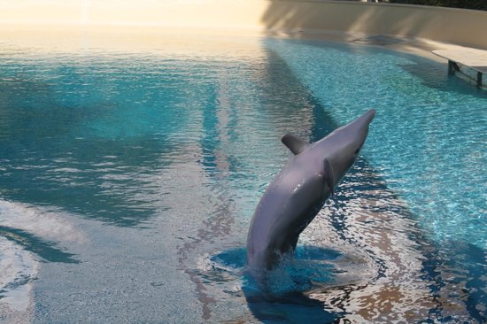 The Mirage Hotel & Casino: Siegfried & Roy's Secret Garden & Dolphin Habitat