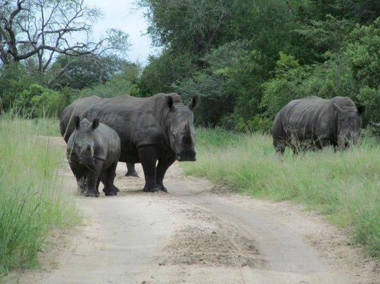 andBeyond Kirkman's Kamp:                   Rhino on the road to Kirkman's