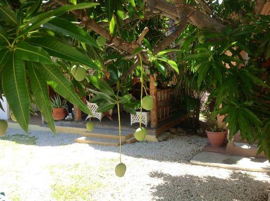 Villa Punta Salina: More Mangos