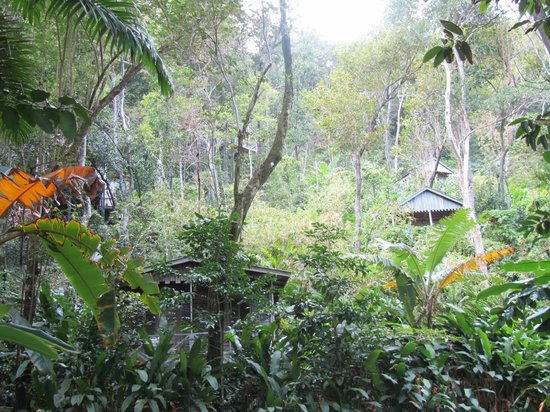 Jungle Bay, Dominica:                   View from the restaurant path up to a few of the cabins