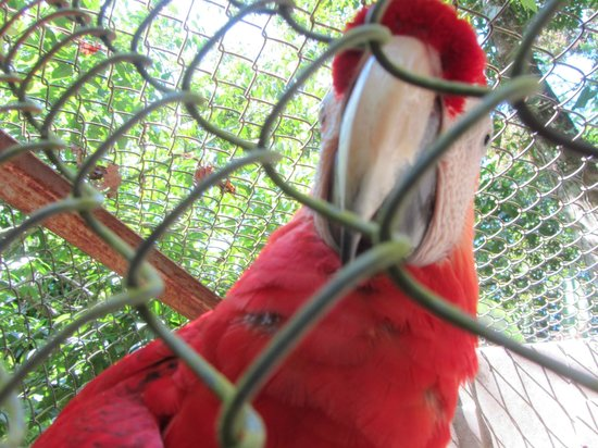 Osa Wildlife Sanctuary:                                     Bird in a cage - Hard to believe you need to go to Costa Ric