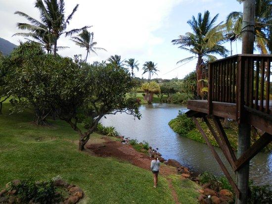 Maui Zipline Company:                   The last zip, over the pond...