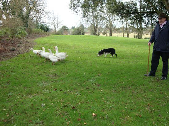 Jerpoint Park:                   Herding with a twist!
