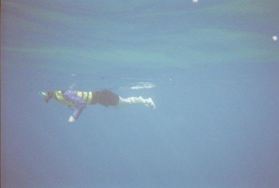 Ko Olina Ocean Adventures:                                     snorkeling