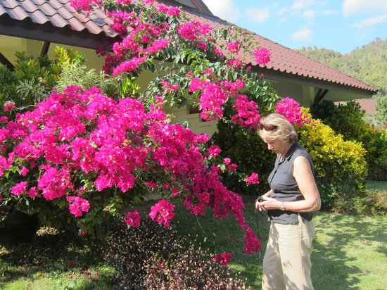 Maekok River Village Resort:                   Front of our chalet - Veranda behind Bougainvillea