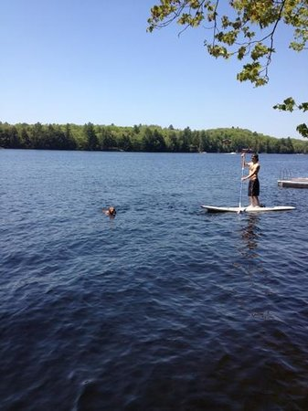 paddle boarding with the dog a vizsla on Lake Muskoka