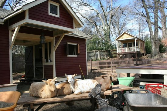 The Social Goat Bed & Breakfast:                   Barnyard