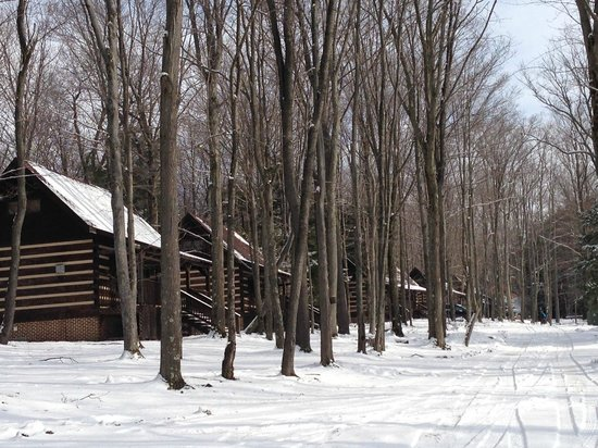 Savage River Lodge:                   Row of Cabins