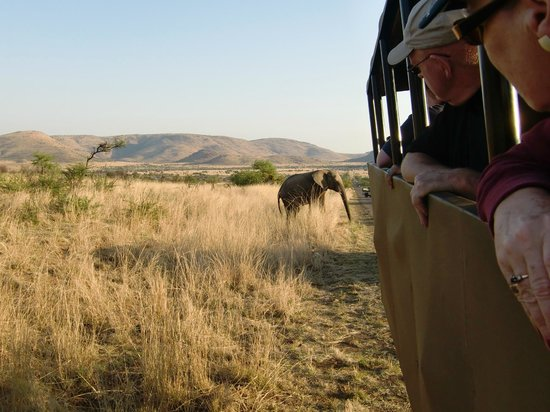Pilanesberg National Park, South Africa:                   Olifant loopt achter de safariwagen langs