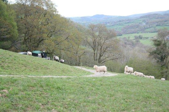 Mandinam:                   the hillside