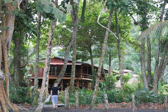 Hotel Banana Azul:                   View from the beach!!                 