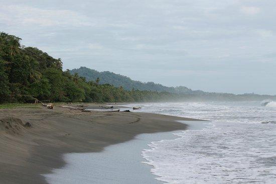 Hotel Banana Azul:                   Beautiful Playa Negra...                 