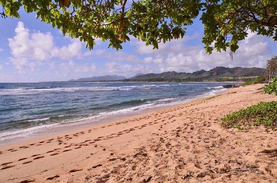 Aston Islander on the Beach:                   Coarse sandy beaches