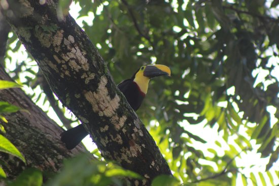 Hotel Monte Real:                   Toucan outside our room!