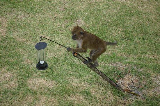 The Houben Hotel:                                     Get up early for the monkeys