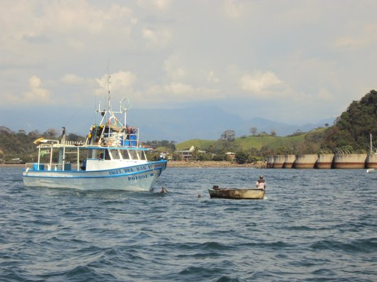 Planet Dolphin Cruises:                                                                         Local fishing boats