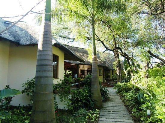 Sefapane Lodge and Safaris:                   Palmbomen op het mooie parkachtige terrein
