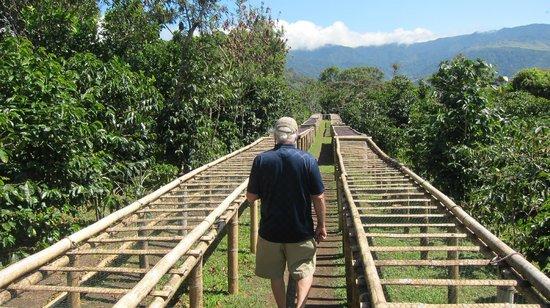 Boquete Coffee Tour:                   Coffee Farm