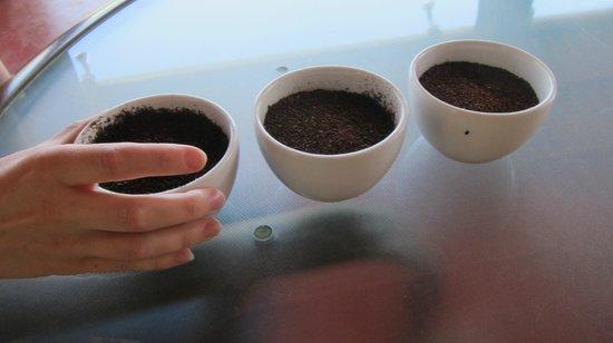 Boquete Coffee Tour:                   Light, Medium, and Dark Roast Coffees