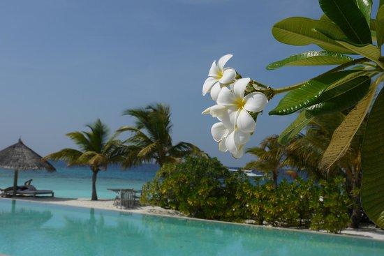 Cocoa Island by COMO:                   красота