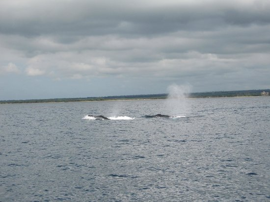 Hale Huanani Bed and Breakfast:                   Pacific Whale Foundation