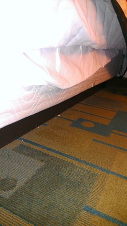 Quality Inn at International Drive:                   Debris under bed - easy access for dogs
