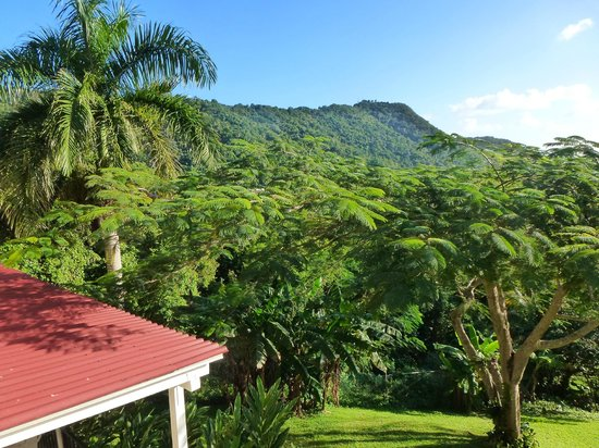 Ceiba Country Inn: View