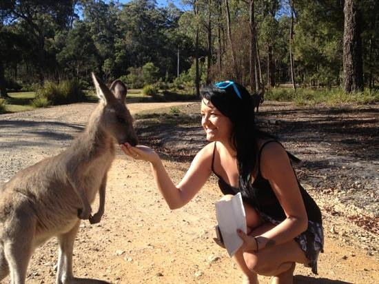 Woodbine Park Eco Cabins:                   feeding kangaroos