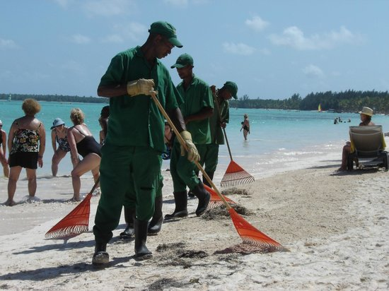 Barcelo Bavaro Beach - Adults Only:                   They clean the beach at mid day.